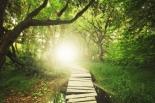 a magical bridge in a green lush forest