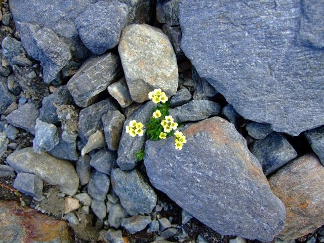 flowers_on_stones