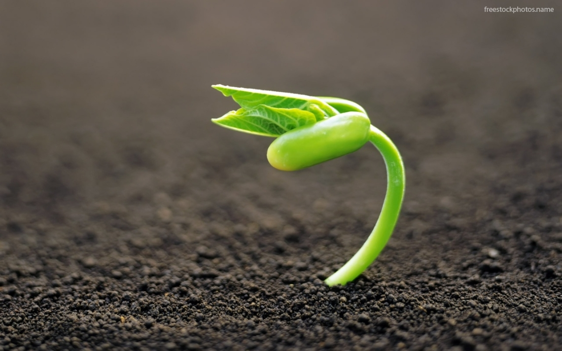 out-of-a-seed-plant-1671
