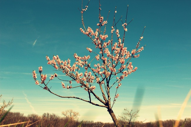 tree-2247128_1280