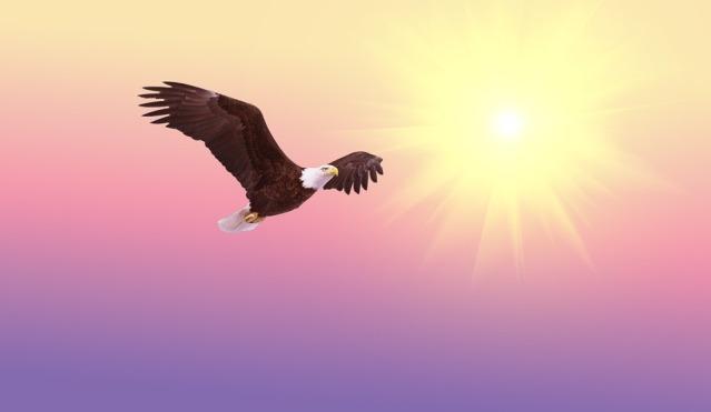 bald-eagle-521492_960_720